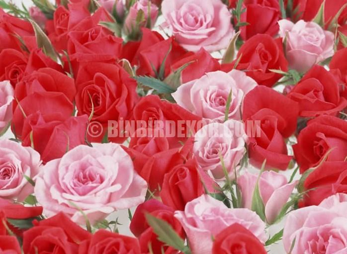 Oda gülleri - ekim özellikleri