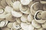 en güzel halı modelleri 2012_ (39)