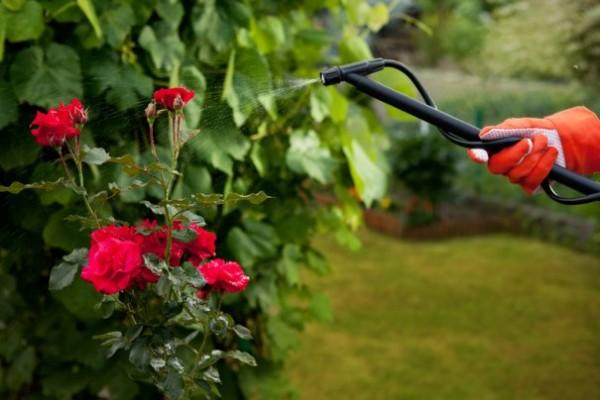 ağustosta bahçe bakımı_2
