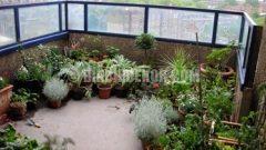 Balkonunuz Bahçeniz Olsun…