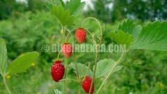 Bahçenize yaz bakımı önerileri