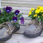 Eski ayakkabılardan mükemmel saksılar