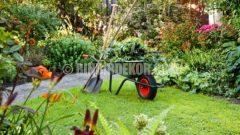 Ağustos ayında çim ve bahçe bakımı